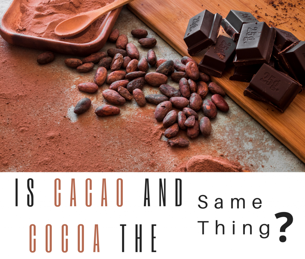 difference between cacao and cocoa